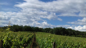 Vino i rakija ( domaće)