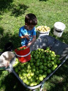 Rakija od jabuke - Jabukovača