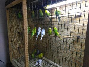 Papagaji,kavezi,hrana, kornjače,zamorci,činčile