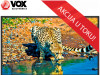 VOX TELEVIZOR 43DSA314B, 43″ LED TV, FULL HD