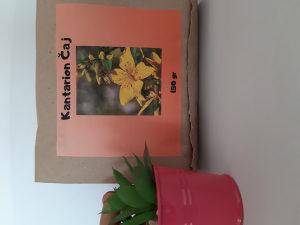 Kantarion čaj,trava za dušu,antidepresiv