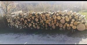 Drva grab i rast