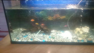 akvarijum od 100 litara sa opremom i šest ribica