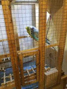 Papagaji Standard