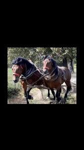 prodajem konje