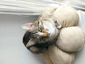 Poklanjam mačka