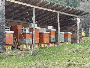 Pčele, sedam jakih društava