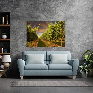 Canvas slika - Zalazak sunca u vinogradu