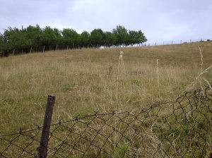 Zemljište PLAC 1524 m² B. Luka 3.5 km od Boske 13 KM/m²