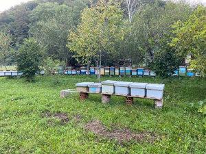 Pčele sanduci