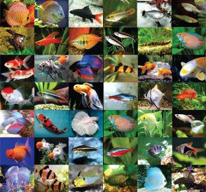 Akvarijumske ribice i akvarijumi