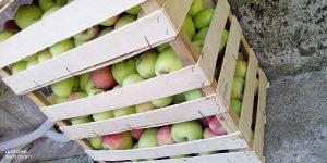 Konzumna jabuka petrovnjaca nova