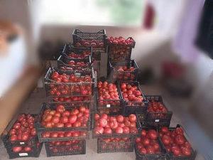Domaći paradajz