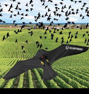 Scarybird zastita od ptica- jedina efikasna-ORIGINAL