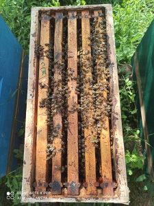 Pčelinje društvo, rojevi, pčele