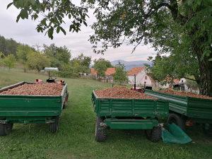 Domaći krompir 2021