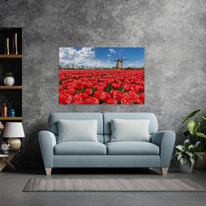 Canvas slika - Polje tulipana, Holandija, Vjetrenjača