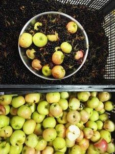 Aronija i jabuka sok od aronije i jabuke bez šećera