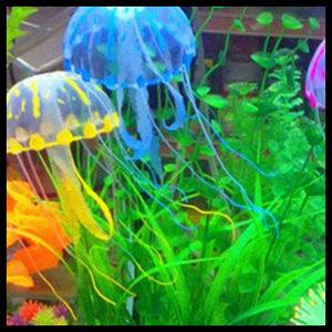Akvarij sa meduzama