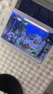 Akvarium veliki