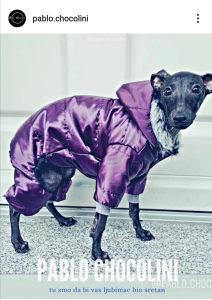 Odjeća za pse