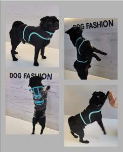 Odjeca za pse